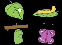 Kindergarten Giggles'n'Grins : Butterflies!