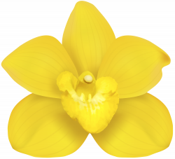 Yellow Orchid PNG Clip Art | Gallery Yopriceville - High-Quality ...