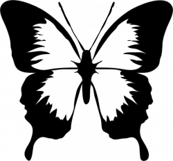 Butterfly Outline Clipart | Clipart Panda - Free Clipart Images