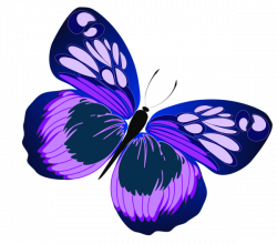 Blue and Purple Butterfly PNG Clipart | Motýle | Pinterest ...