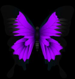Butterfly High-definition video Wallpaper - Purple Butterfly PNG ...
