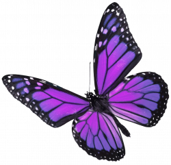 Showing Gallery For Real Purple Butterfly - Litle Pups | purple ...