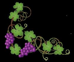 Transparent Vine Decoration PNG Clipart Picture | Gallery ...