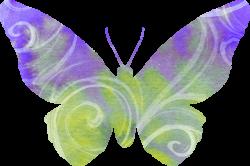 Butterflies - Artsy Bee Digital Images