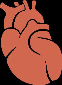 Organ donation Organ transplantation Tissue - Red heart 1526*2078 ...