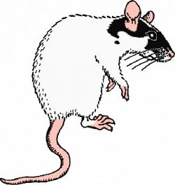 Inter-species interactions of fancy rat