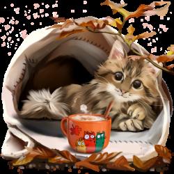 chatons,chats,cat,gato,Katze,katter,kettir,cait,   Coffee & Tea ...