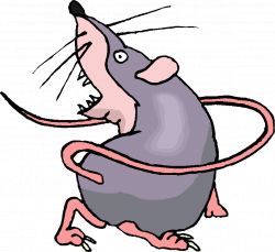 28+ Collection of Rat Clipart Transparent | High quality, free ...