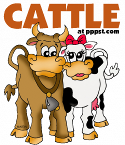 Cattle & Cows - FREE Presentations in PowerPoint format, Free ...