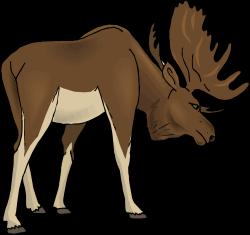 Moose clipart cartoon free images 5 - Clipartingcom   cartoon ...