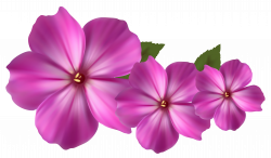 Pink Flower Decor PNG Clipart | Gallery Yopriceville - High-Quality ...