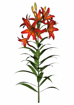 Lily Flowers Clipart at GetDrawings.com | Free for personal use Lily ...