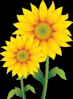 fleurs,flores,flowers,bloemen,png | CLIP ART FLOWERS TWO | Pinterest ...