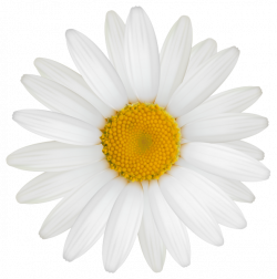 Daisy PNG Clipart Image | photography | Pinterest | Clipart images ...