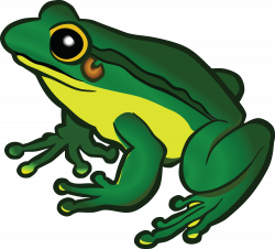 Free Clipart Of A frog   FROG CLIPART   Pinterest   Frogs