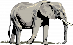 Elephant Head Clipart at GetDrawings.com | Free for personal use ...