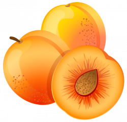 Large Painted Apricot PNG Clipart | FRUIT AND VEGETABLES CLIP ART ...