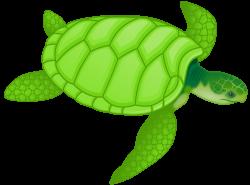 OnlineLabels Clip Art - Green Sea Turtle