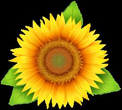 Sunflower PNG Clipart Image | flower designes | Pinterest | Clipart ...