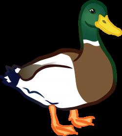 Duck clipart duck beak ~ Frames ~ Illustrations ~ HD images ~ Photo ...