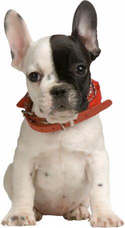 Puppy PNG Clipart | Clipart animals | Pinterest | Animal and Dog