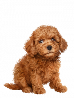 chiens,dog,puppies,wallpapers   Cartoon cats and dogs   Pinterest   Dog