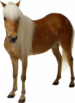 Horse Transparent PNG Image | Web Icons PNG