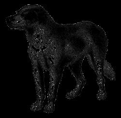 Antique Images: Vintage Dog Breed Boarhound Digital Download Animal ...