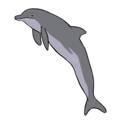Free Dolphin Drawing Colored, Download Free Clip Art, Free ...