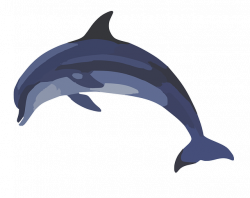 Common bottlenose dolphin Common dolphin Clip art - flippers 640*507 ...
