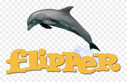 Dolphin Clipart Flipper - Png Download (#2299630) - PinClipart