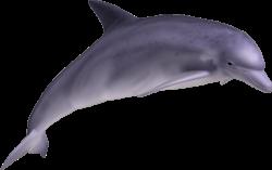 Dolphin 09 by clipartcotttage on DeviantArt