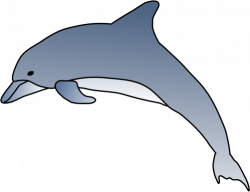 Free Spinner Dolphin Cliparts, Download Free Clip Art, Free ...