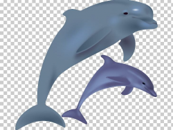Common Bottlenose Dolphin Spinner Dolphin Free Content PNG ...