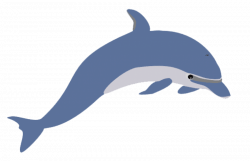 cute clipart dolphin png - Free PNG Images | TOPpng
