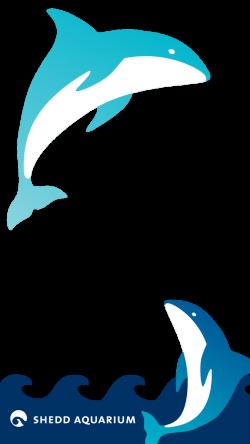 Shedd Aquarium on Twitter: