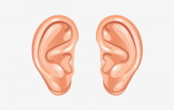 Left And Right Ear Cartoon, Ear Material, Leave The Material, Png ...