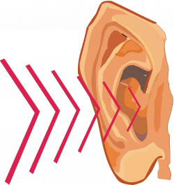 28+ Collection of Ear Sound Waves Clipart | High quality, free ...