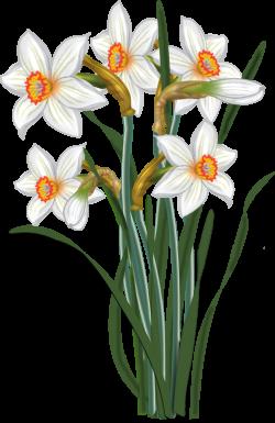 flowers - vector Narcissus   malowanki   Pinterest   Flowers, Clip ...
