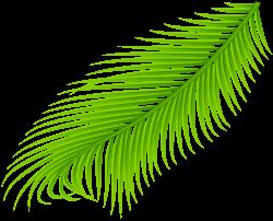Palm Branch Transparent Clip Art | Gallery Yopriceville - High ...