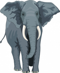 Elephant Animal Clipart Pictures Royalty Free | Clipart Pictures Org