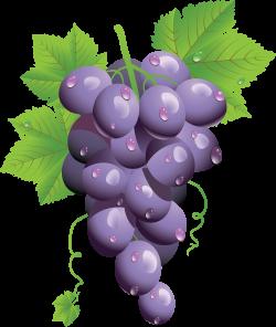 Grape Twenty-eight | Isolated Stock Photo by noBACKS.com