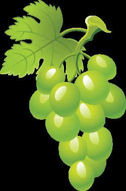 Grape Seventeen | Isolated Stock Photo by noBACKS.com