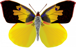 Clipart - dogface butterfly