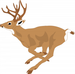 28+ Collection of Free Clipart Of Whitetail Deer | High quality ...