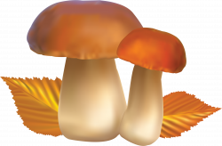 Mushroom PNG image. Lots! | Clip art | Pinterest