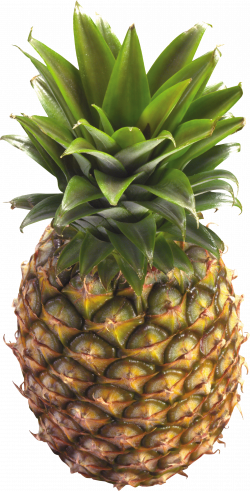 Pineapple Thirty-two | Isolated Stock Photo by noBACKS.com