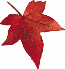 Clipart - Red maple leaf
