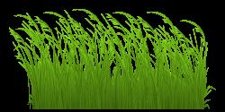 Free grass clip art pictures clipartix | Diversos | Pinterest ...