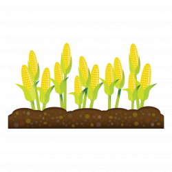 Crops Growing Corn clipart free image